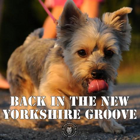 meme-dog-yorkshire-web