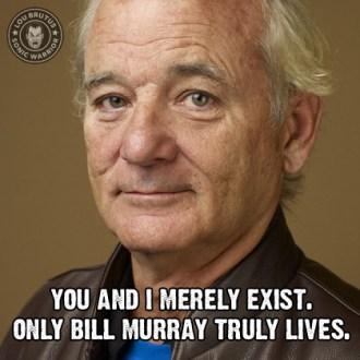 meme-murray-web