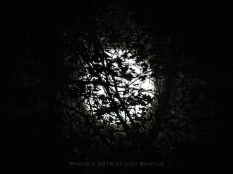 moon-111316-004-trees-web