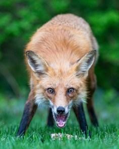 041721-03-FOX-WEB