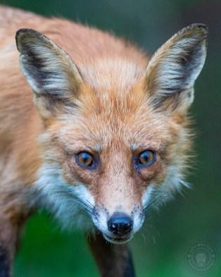 041721-08-FOX-web