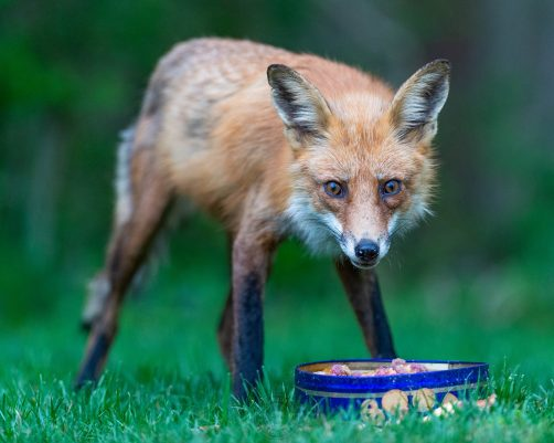 041721-10-FOX-web