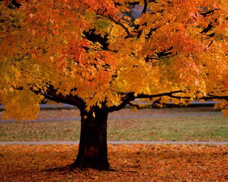 4 Things to do now that it's officially Fall