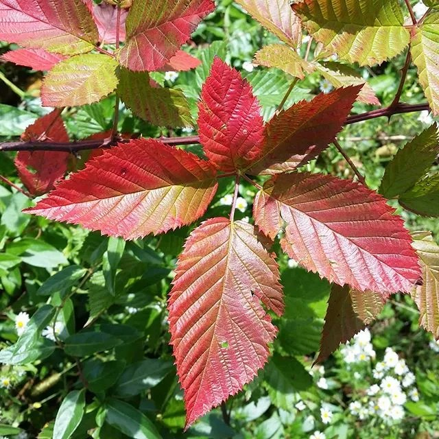Color #leaves