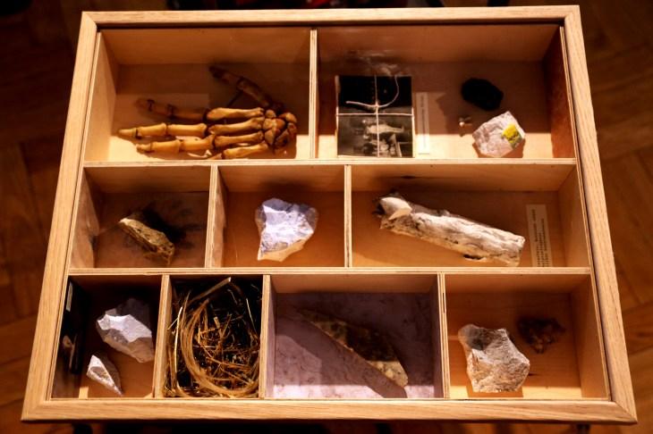 Detalj startpunkt. Bild på en trälåda med flera olika fack. I flera fack finns stenar, i ett fack är det en hand... mm. Foto: Calle Holck