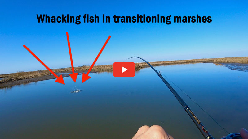 Whacking fish in transitioning marshes