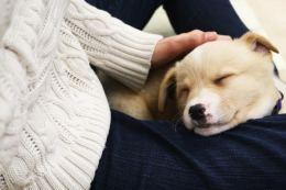Star fell asleep on Sahar's leg Photo by Sarah Rohleder