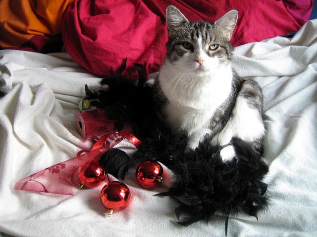 eddie-cat-christmas-portrait-2011
