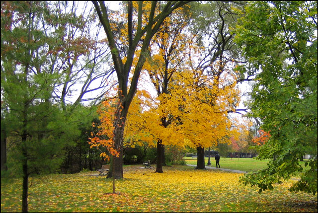 fall-colour-in-the-park