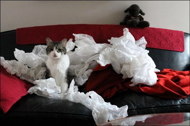 ed-in-tissue-paper