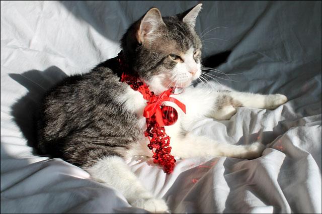 eddie-christmas-cat-02