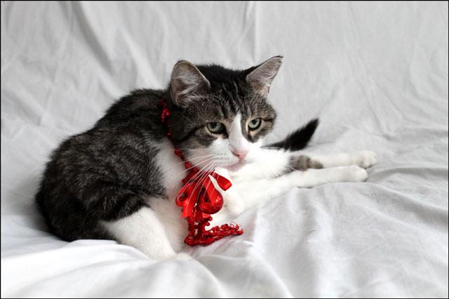 eddie-christmas-cat-06
