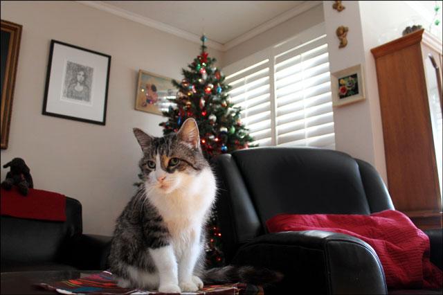 eddie-christmas-tree-4