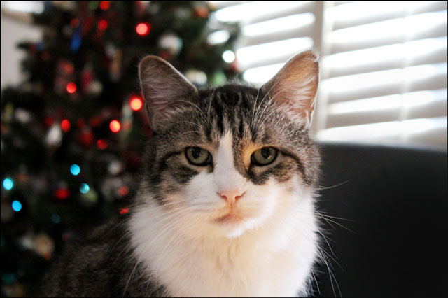 eddie-christmas-tree