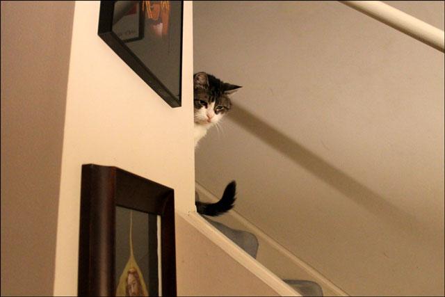 eddie-on-stairs