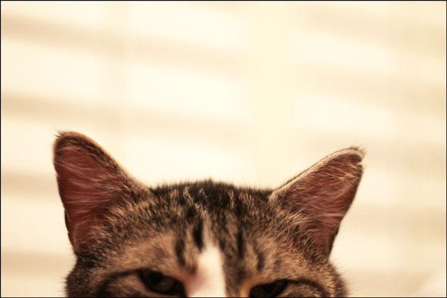 eddies-ears