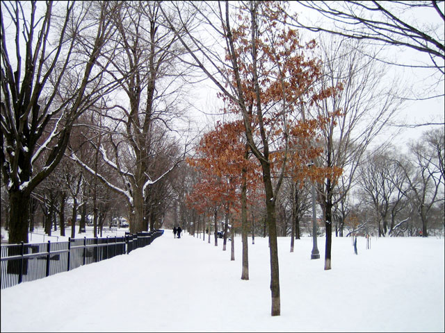 park-path-in-the-snow