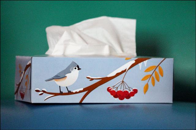 tissue-box-with-bird
