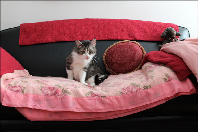 ed-on-pink-blanket-3