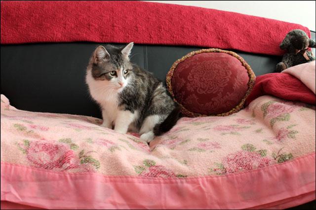 ed-on-pink-blanket-5