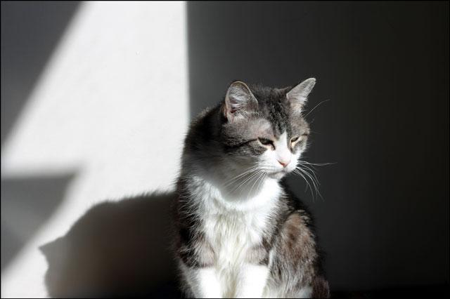 eddie-in-a-sunbeam-4