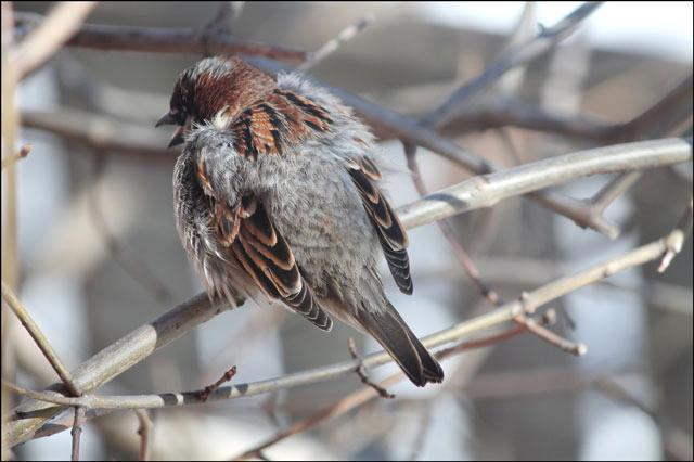 sparrow-04