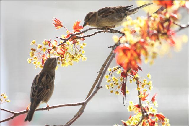 2-sparrows-feeding-01