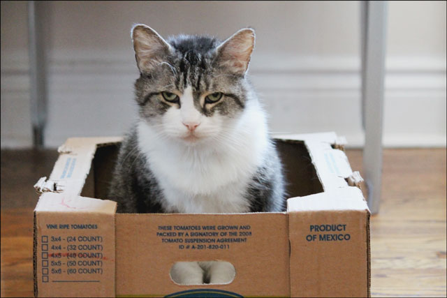 eddie-in-tomato-box-11