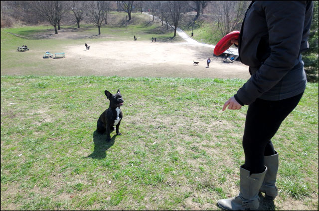 little-dog-in-the-park-2