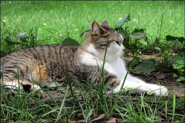 cat-in-the-park-03