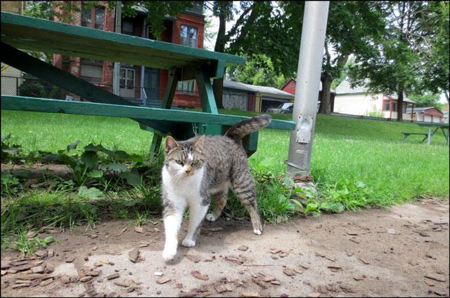 cat-in-the-park-04