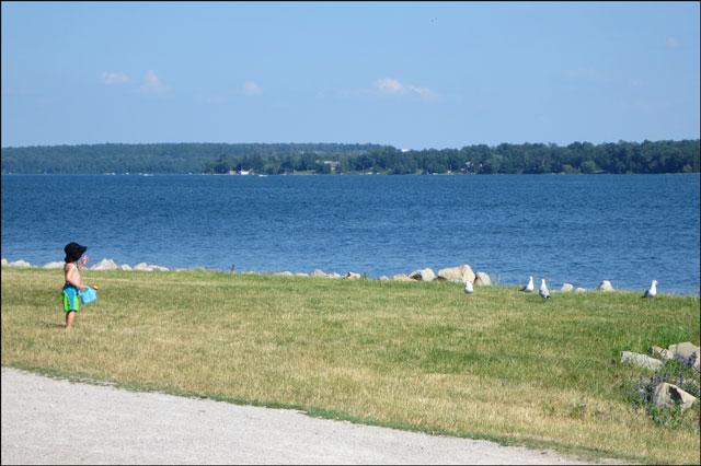 child-and-gulls-beside-lake