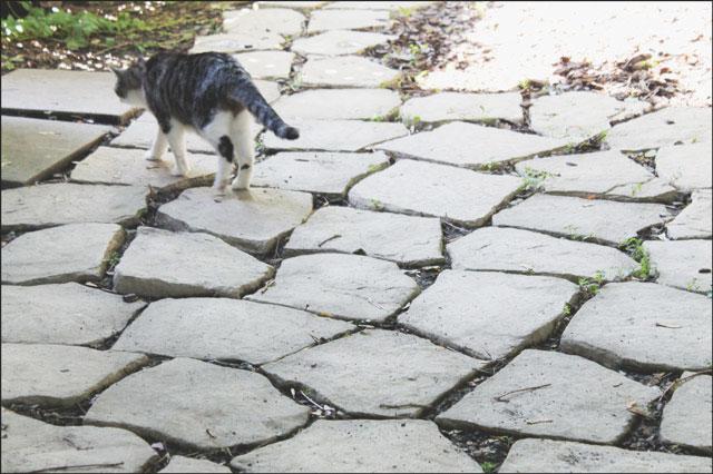 eddie-walking-on-path-2