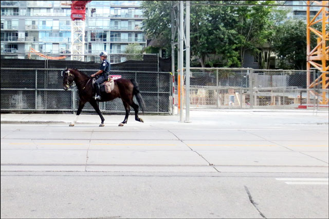 horse-on-king-street