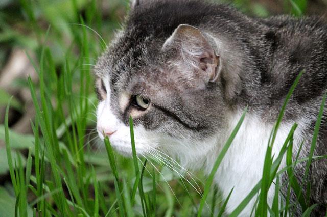 eddie-in-the-grass