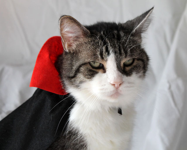 cat-in-costume-dracula-02