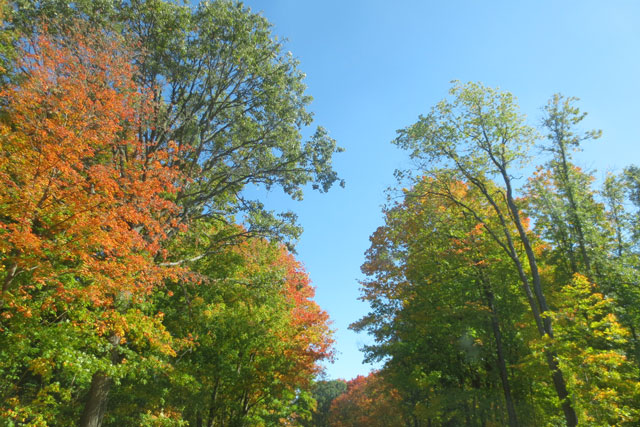 coloured-autumn-trees