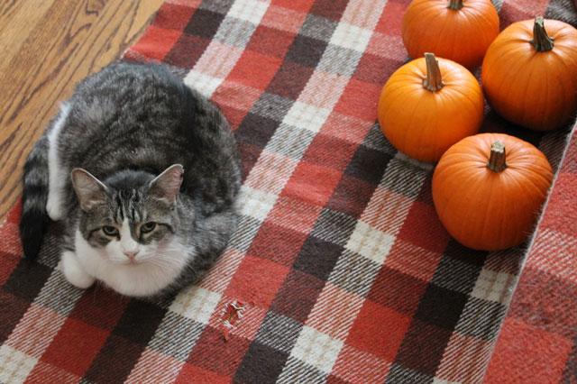 eddie-with-pumpkins