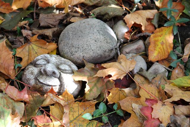 fall-garden-sleeping-rock