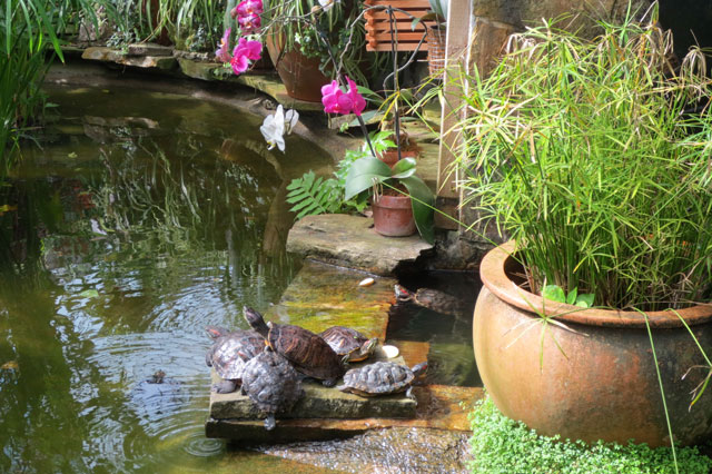 orchids-and-turtles-allan-gardens