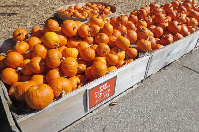pie-pumpkins-for-sale