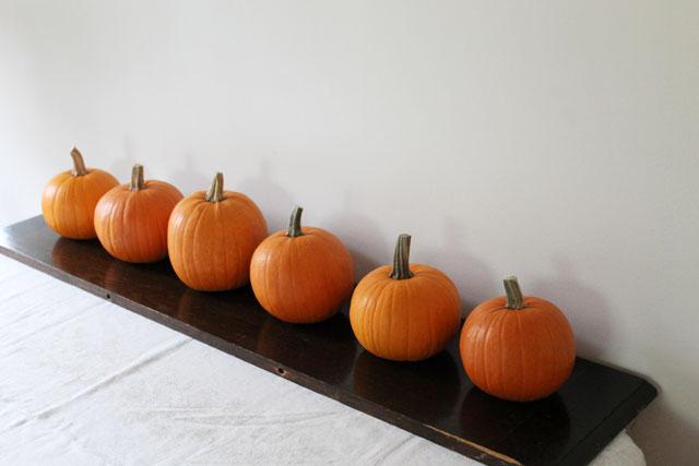 pie-pumpkins-lined-up