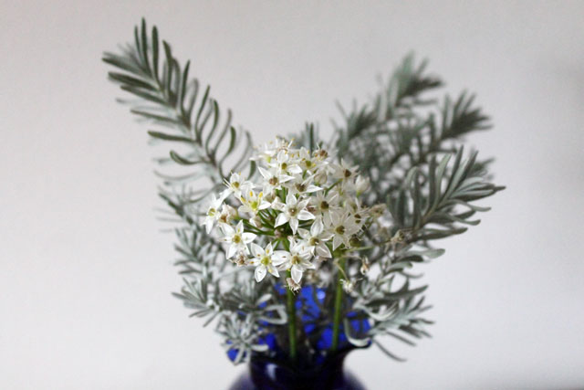 bouquet-of-wild-onion-flowers-and-lavender-leaves