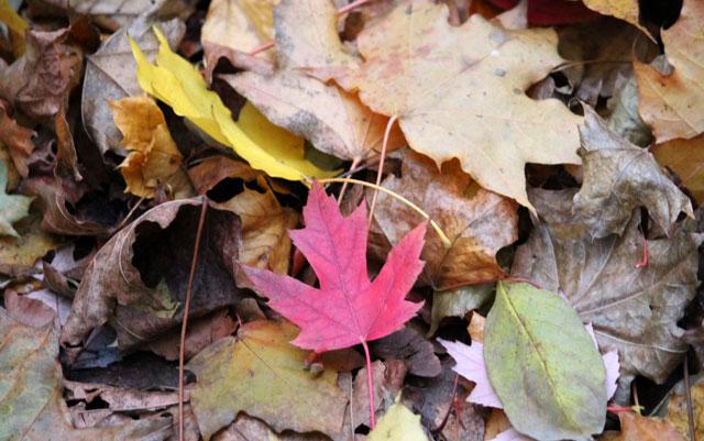 fall-leaves-2