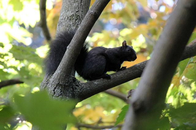 squirrel-in-autumn-tree