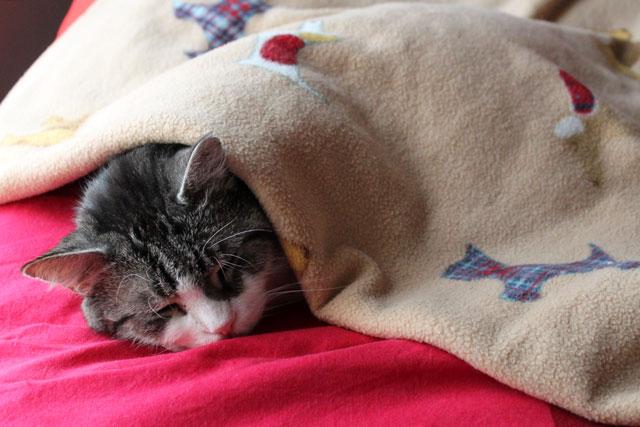 eddie-under-dog-blanket-1