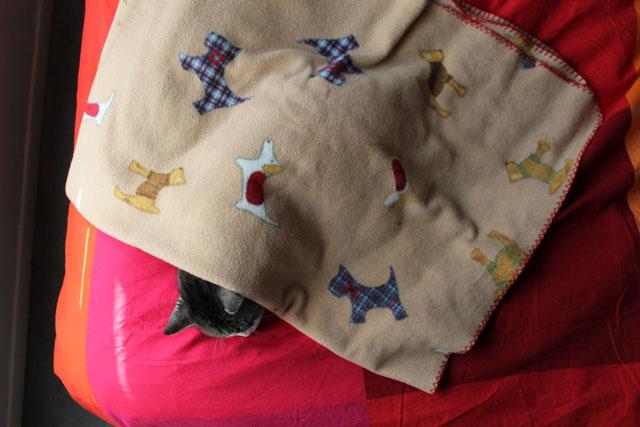 eddie-under-dog-blanket-4
