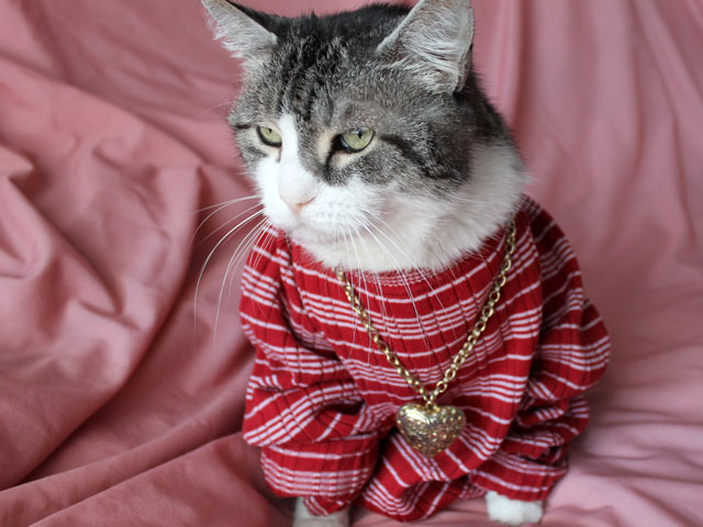 cat-in shirt-necklace-05