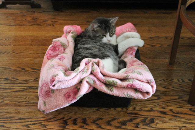 ed-pink-blanket-7