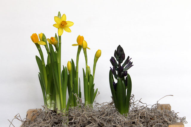 bulbs-for-indoors-4th-day